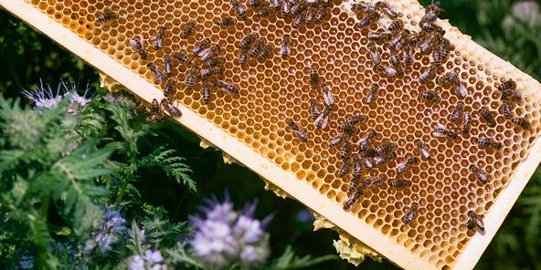 Gisou Mirsalehi Bee Garden